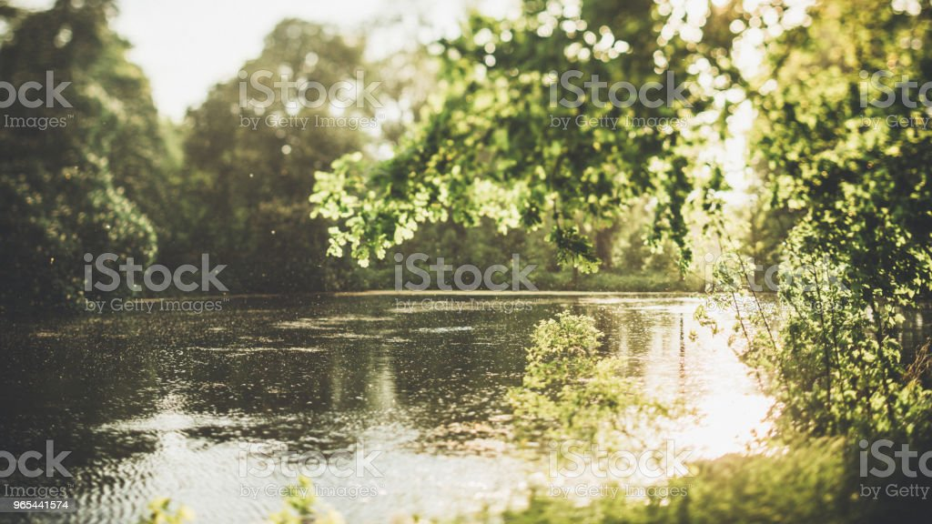 Evening light in the forest by the water royalty-free stock photo