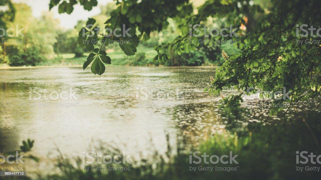 물에 의해 숲에 저녁 빛 - 로열티 프리 0명 스톡 사진