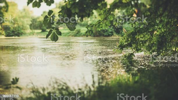 물에 의해 숲에 저녁 빛 0명에 대한 스톡 사진 및 기타 이미지