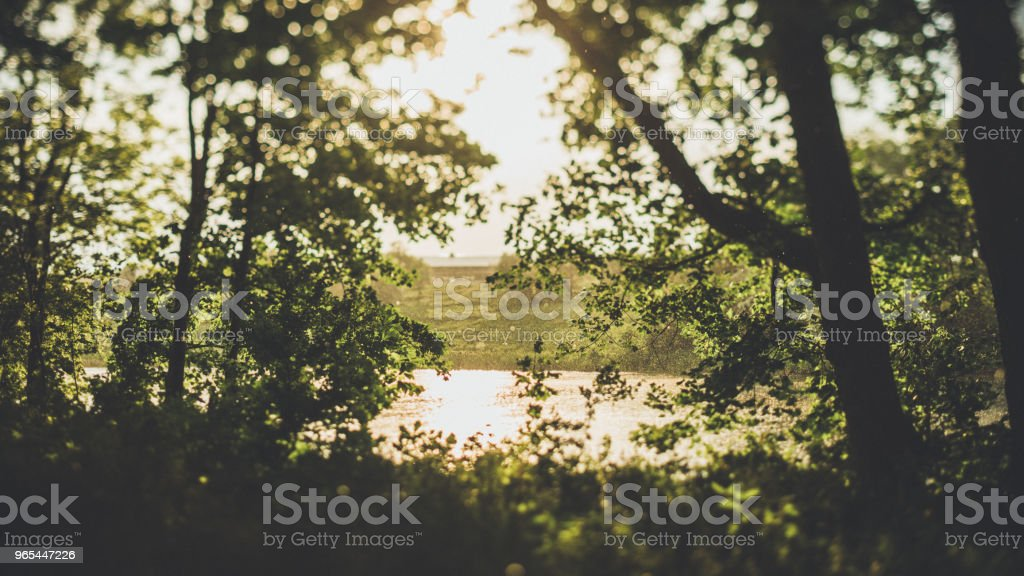 Evening light in the forest by the water zbiór zdjęć royalty-free
