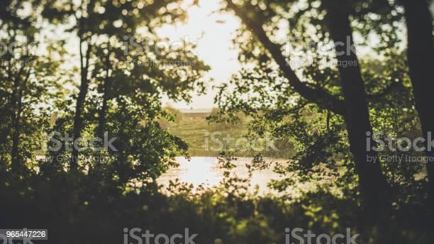 Wieczorne Światło W Lesie Nad Wodą - zdjęcia stockowe i więcej obrazów Bez ludzi