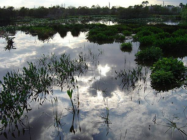 Evening light over Florida wetlands stock photo