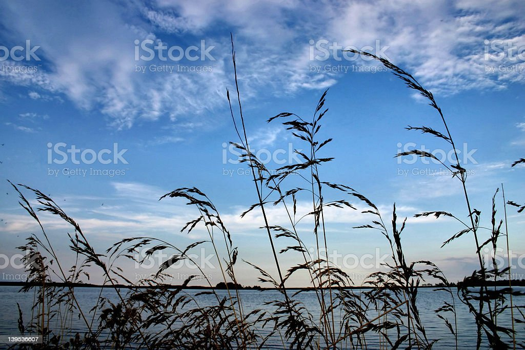 evening rushes royalty-free stock photo