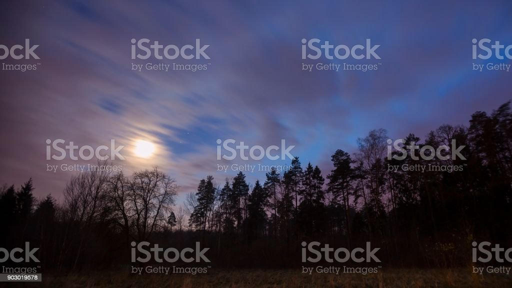 Evening sky over forest stock photo