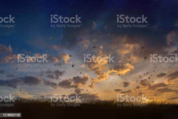 Photo of Evening sky,Amazing Colorful sky and Dramatic Sunset,Silhouette birds flying sky.