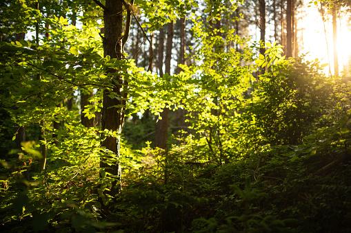 낙 엽 숲 독일에서 석양 0명에 대한 스톡 사진 및 기타 이미지