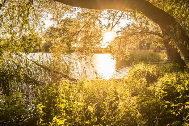 Soleil du soir en forêt avec des plantes d'ortie près d'un lac - Photo
