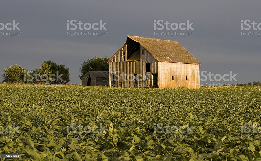 Evening sunlight reflects off old weathered barn. royalty-free stock photo