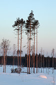 Evening winter landscape, vertical picture