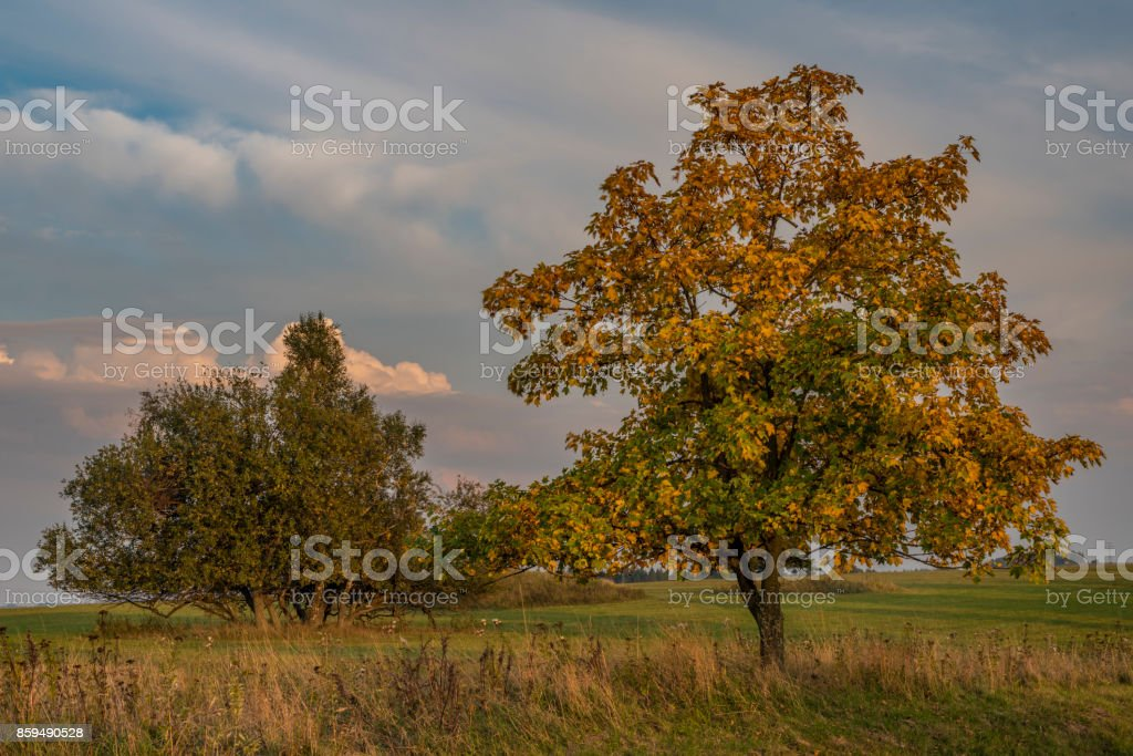 Evening with tree in Slavkovsky les national park stock photo