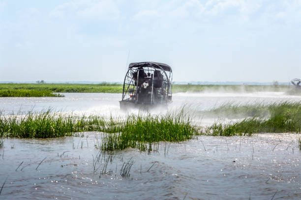 Everglades airboat ride in South Florida, National Park stock photo