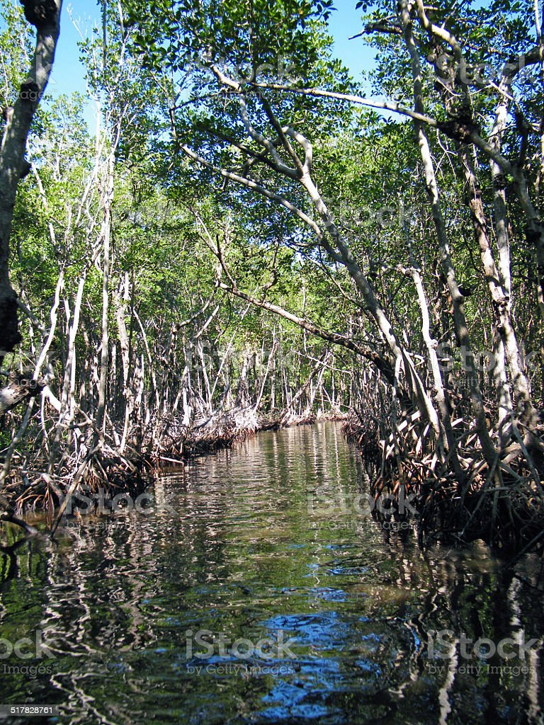 Everglades Channel stock photo