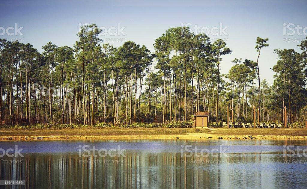 everglades florida royalty-free stock photo