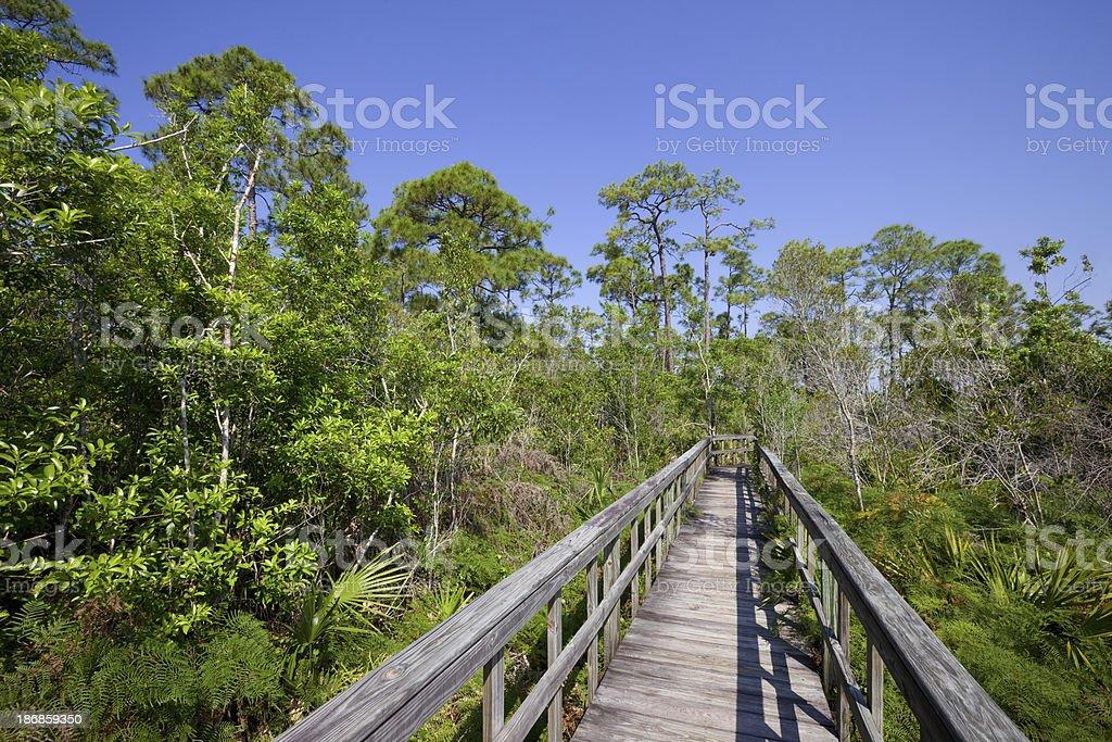 Everglades, Florida royalty-free stock photo