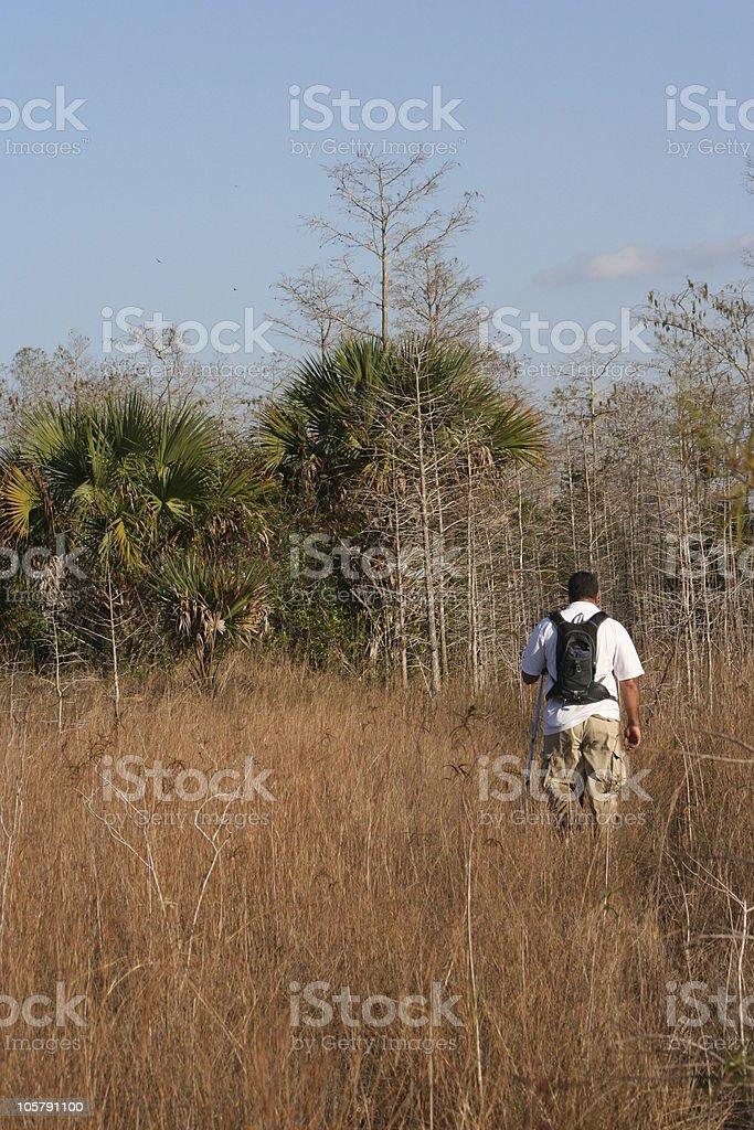 everglades hike royalty-free stock photo