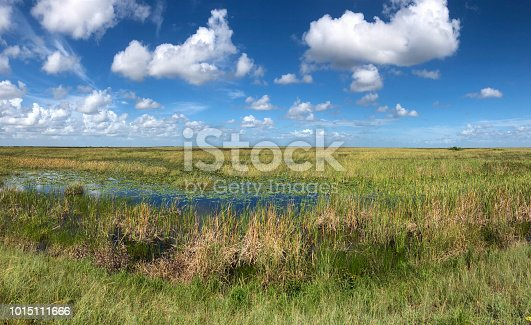 Everglades National Park seen from levee, Coral Springs, Florida