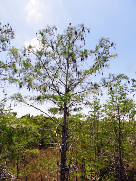 Everglades National Park Florida Scenery stock photo