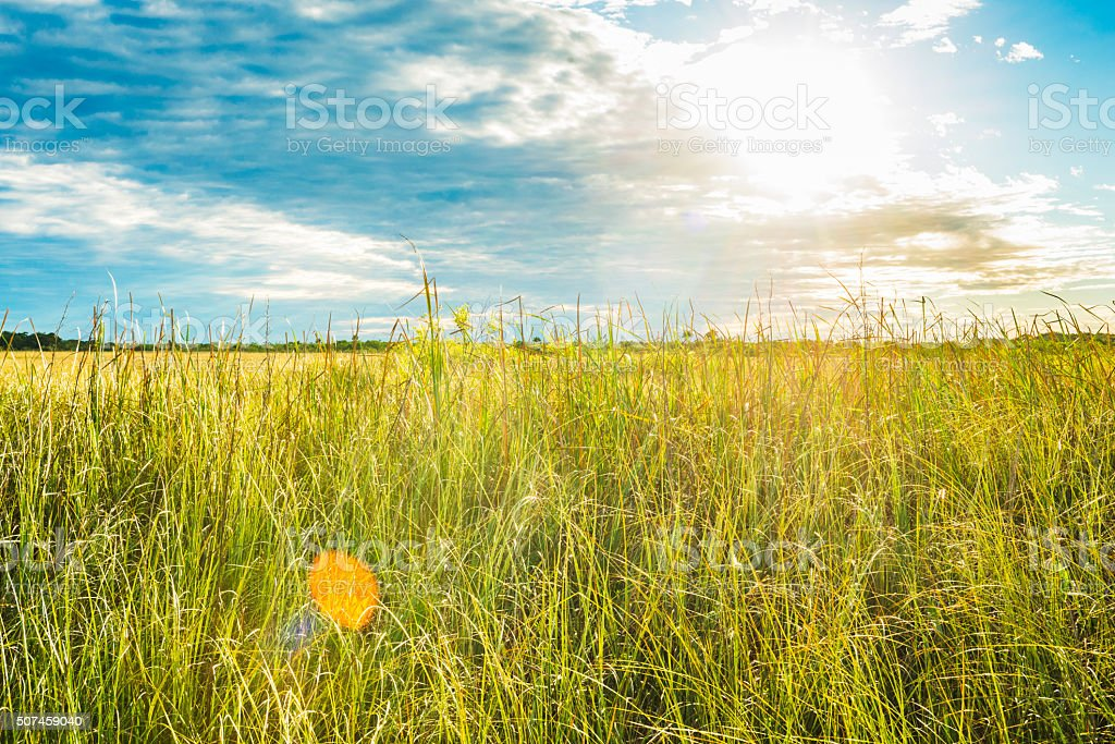 Everglades National Park Landscape with Cloudy Sky on Sunny Day stock photo