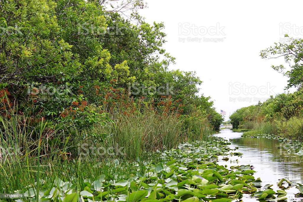 Everglades National Park royalty-free stock photo