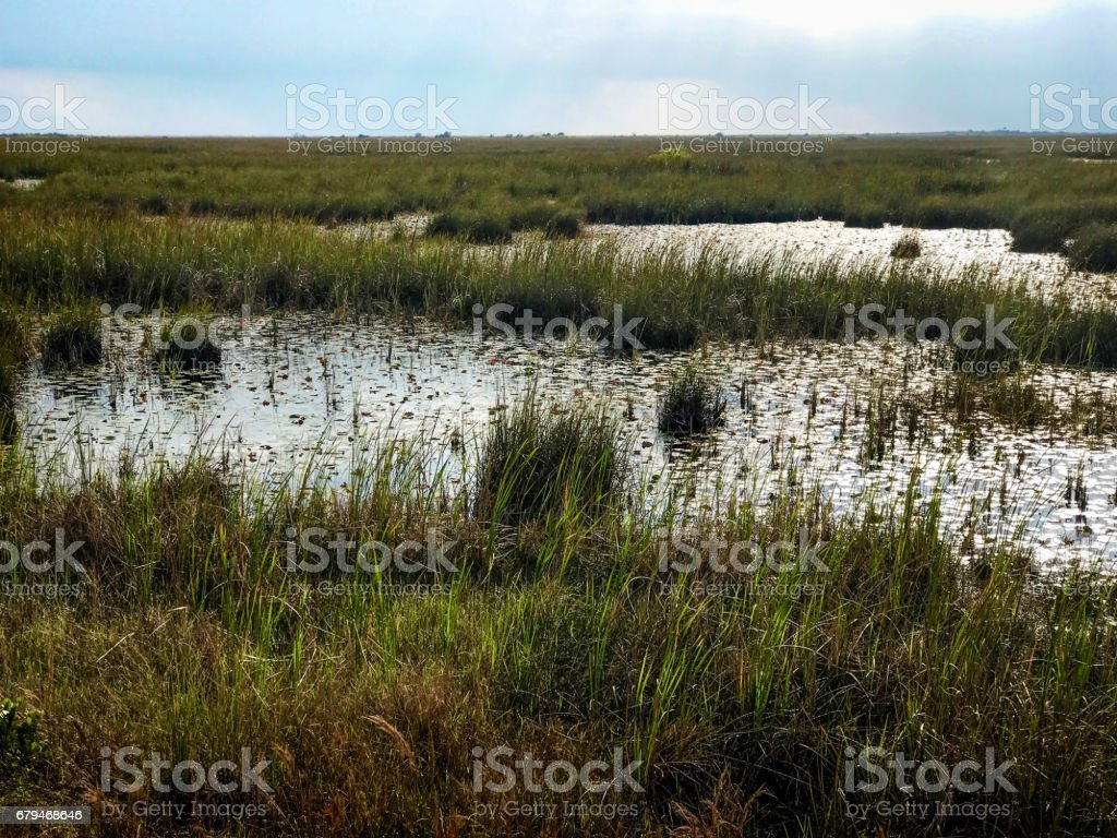 Everglades National Park royalty-free stock photo