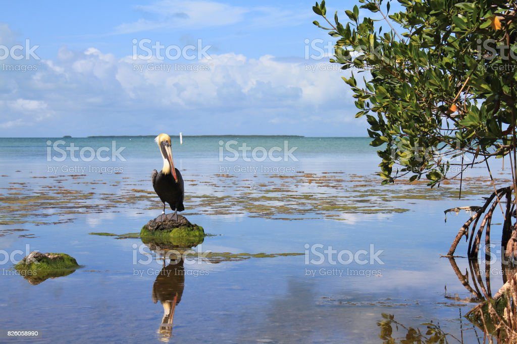 Everglades National Park stock photo