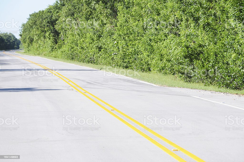 Everglades National Park Road stock photo