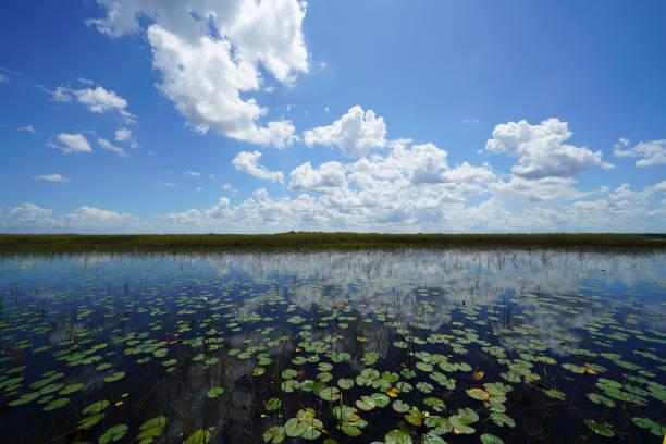 Everglades National Park - Wetland Marsh Environment stock photo