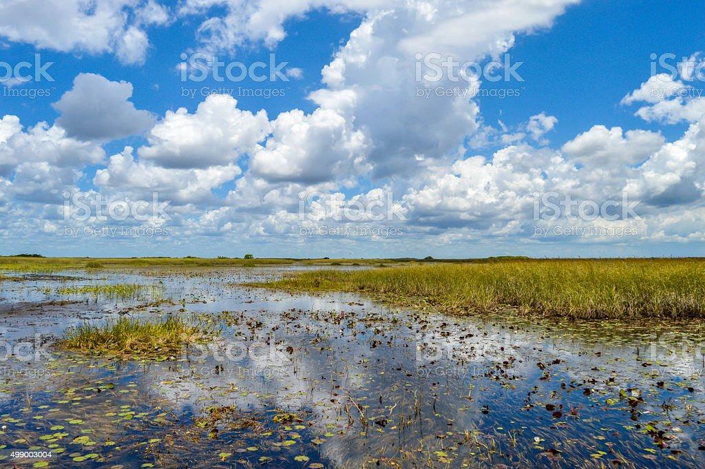 Everglades panorama stock photo