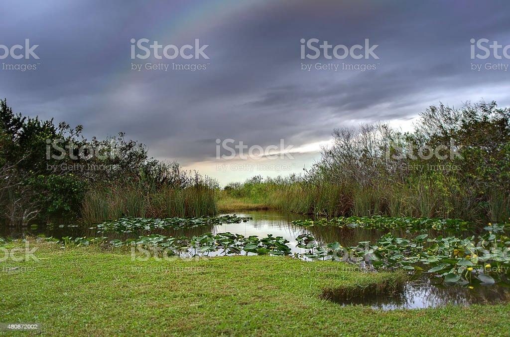 Everglades rainbow stock photo