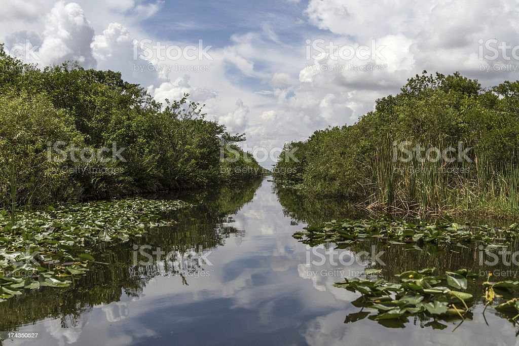 Everglades View stock photo