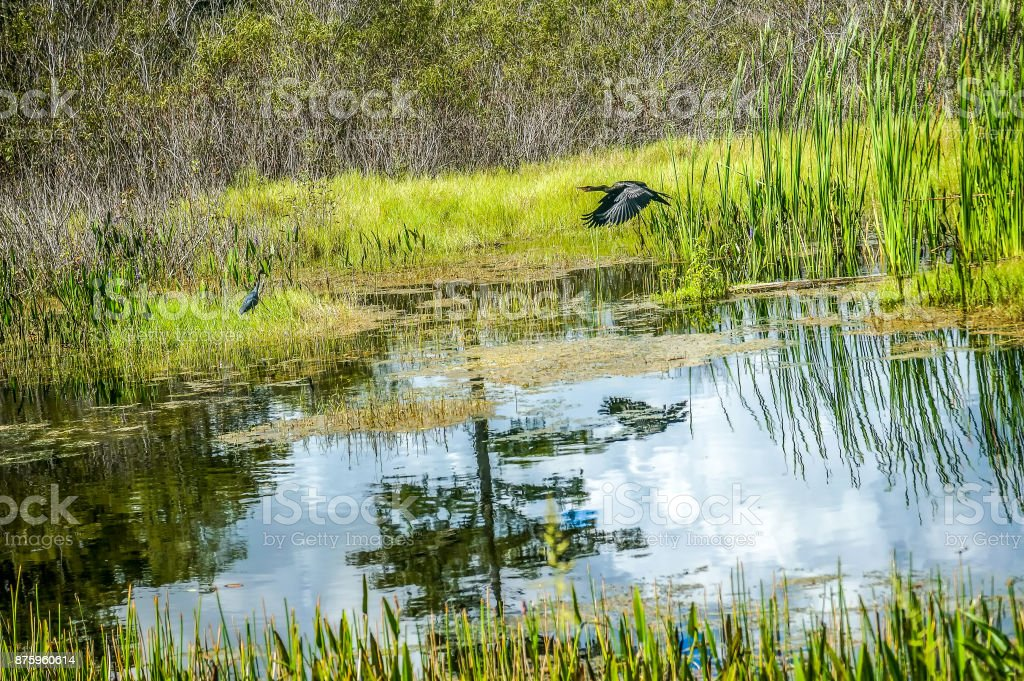 Everglades wetlands in the summer stock photo