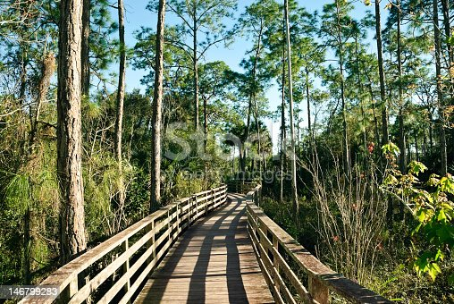 Wildlife Sanctuary boardwalk at Corkscrew Swamp Sanctuary in the Florid Everglades. Horizontal, nobody. Please see my other photos of the Everglades.