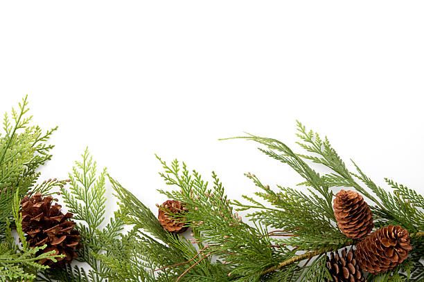 evergreen border with pine-cones - garland stock photos and pictures