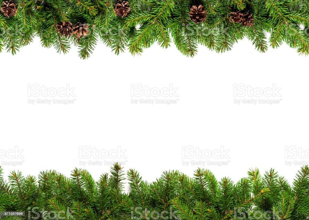 Evergreen branches on white - Zbiór zdjęć royalty-free (Bez ludzi)