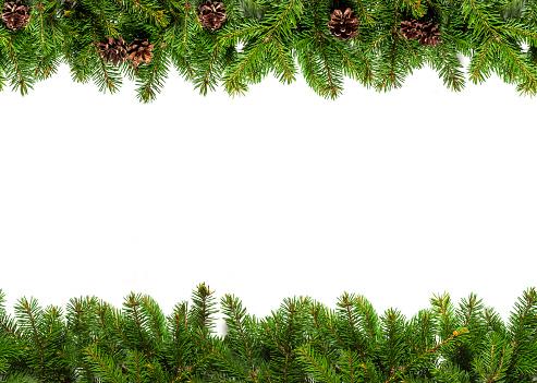 Evergreen Branches On White - zdjęcia stockowe i więcej obrazów Bez ludzi