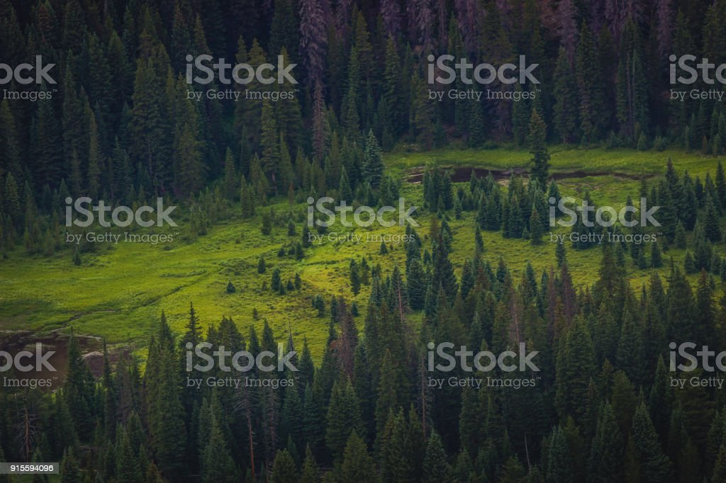 Evergreen Forest Clearing stock photo