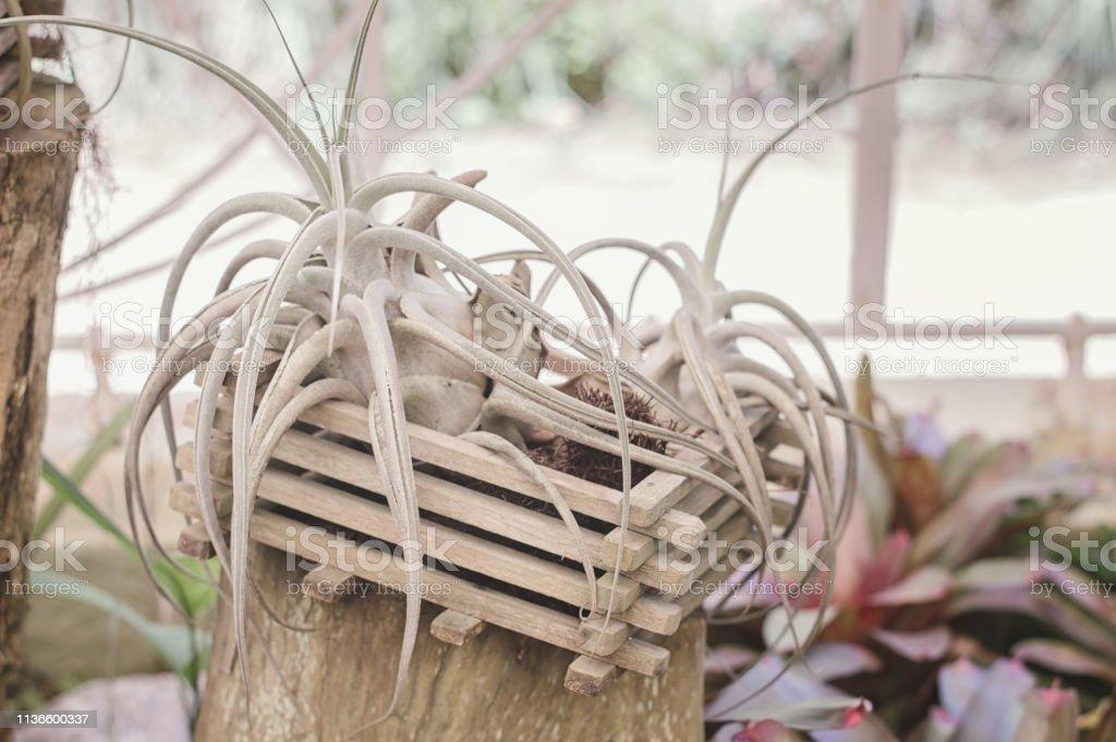 Planta De Hoja Perenne Con Hojas Largas En Una Maceta De