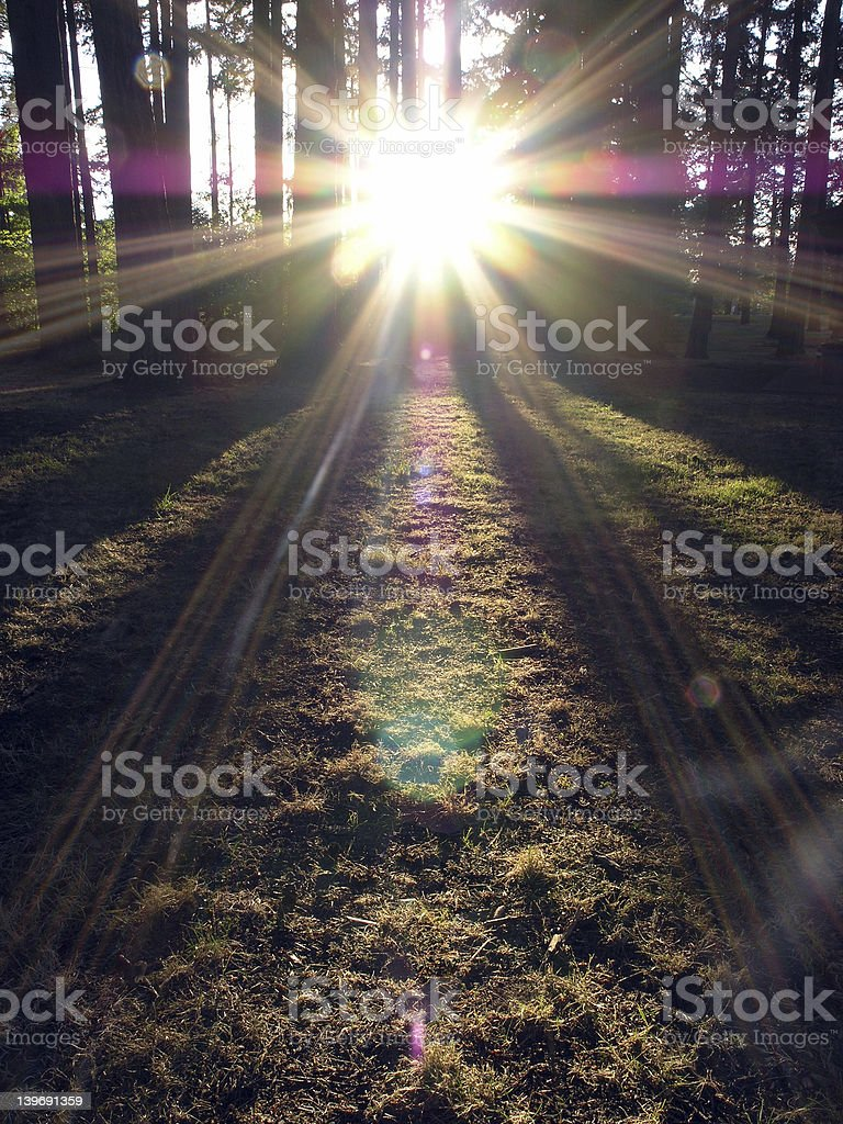 Evergreen Sunburst royalty-free stock photo
