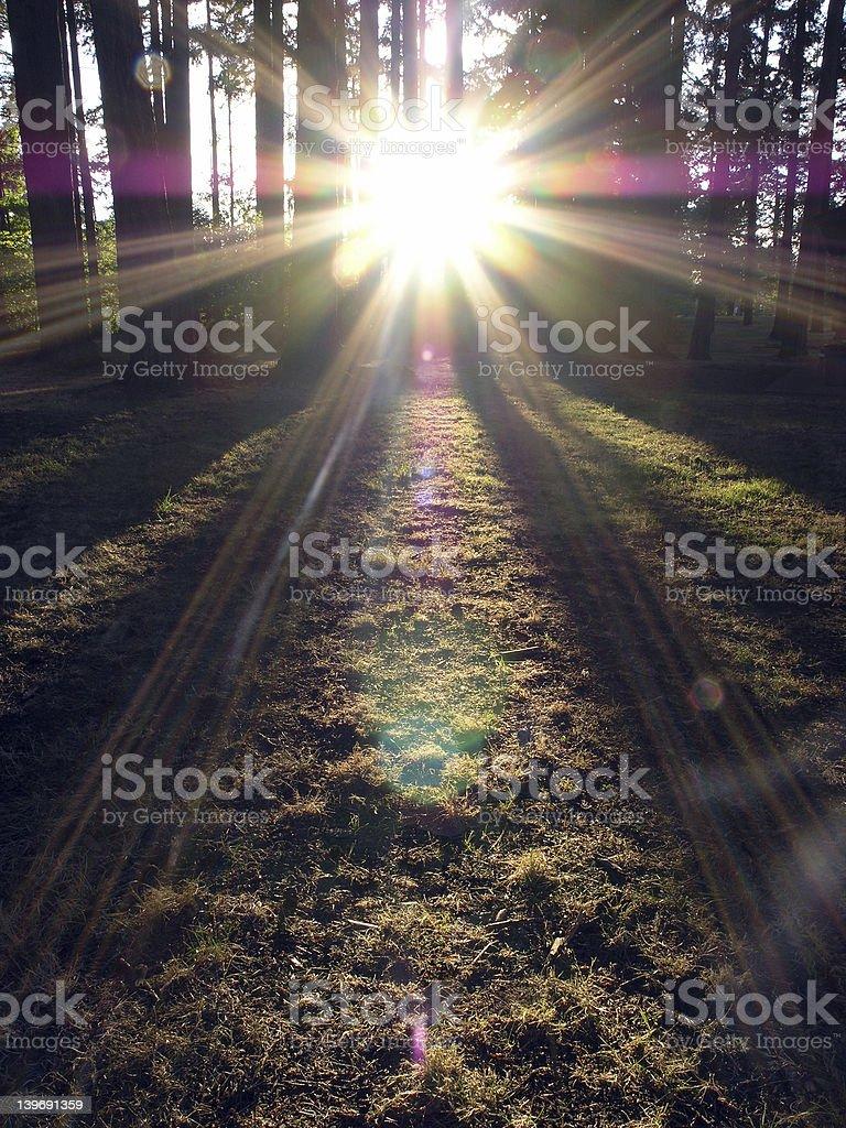 Evergreen Sunburst stock photo