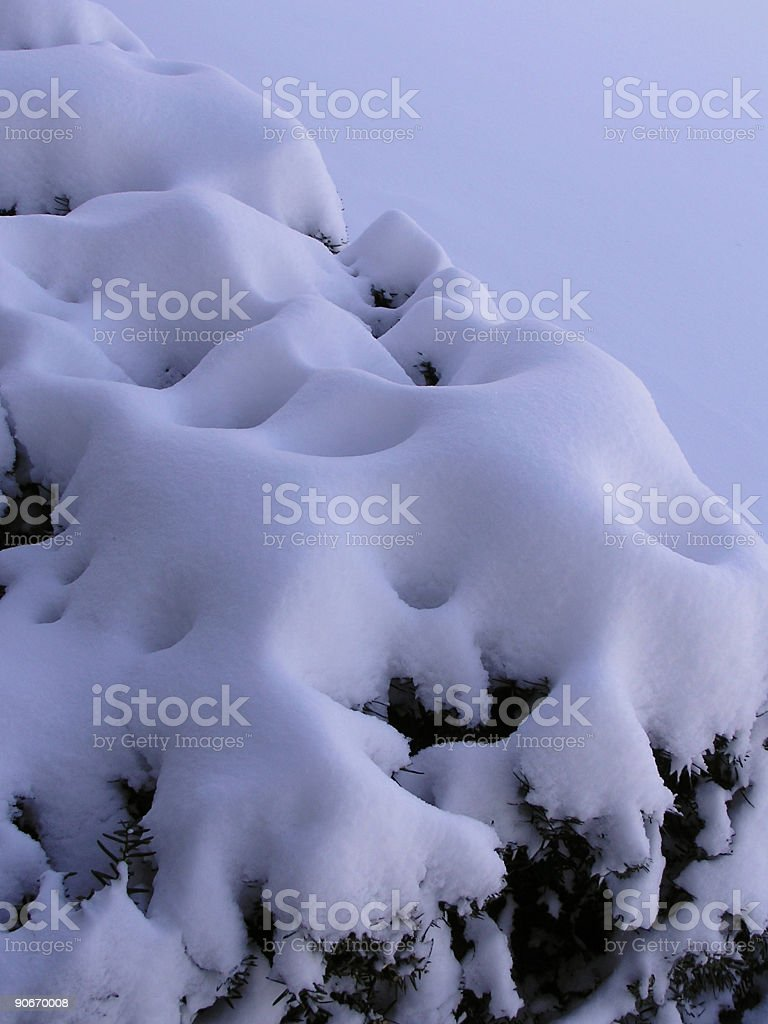 Evergreen Topped with Snow royalty-free stock photo