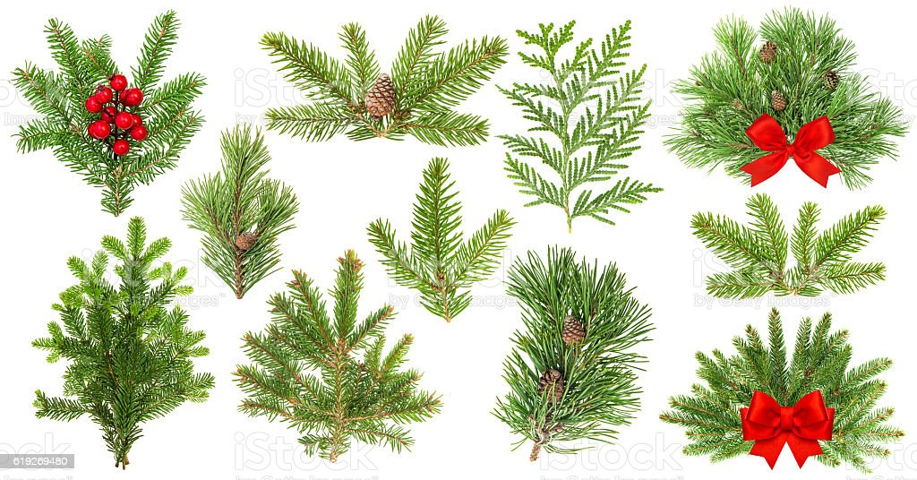 Evergreen tree branches. Christmas decoration red ribbon berries stock photo
