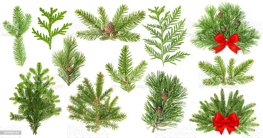 Evergreen tree branches. Christmas decoration red ribbon stock photo