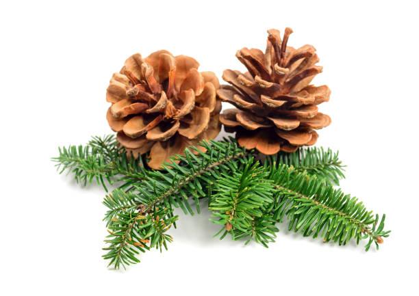 immergrüner baum weihnachten tannenzapfen - kiefernzapfen stock-fotos und bilder
