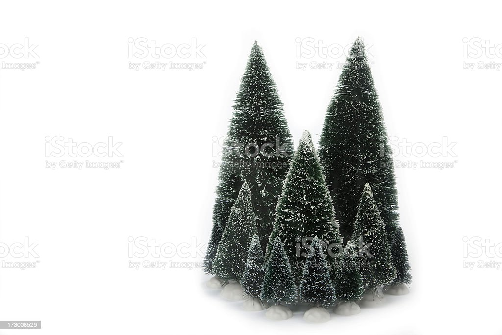 Evergreen Trees, Conifer, Holiday, Decorative, Isolated-on-White, Copyspace royalty-free stock photo