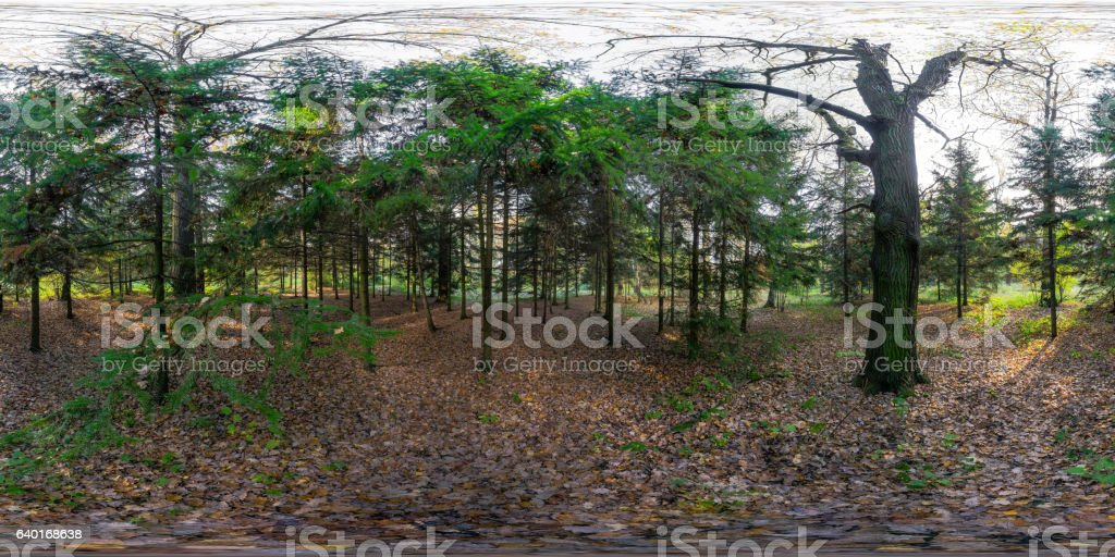 Evergreen trees in the park - 360-degree view stock photo