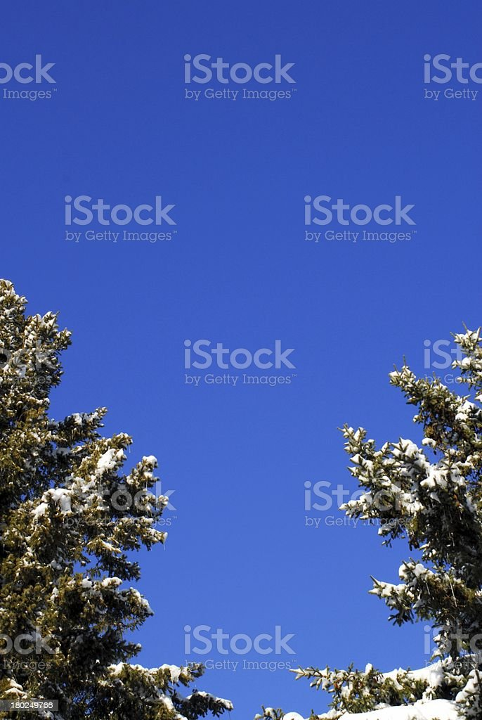 Evergreen trees on blue sky royalty-free stock photo