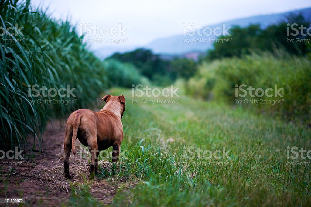 Every dog has its day stock photo