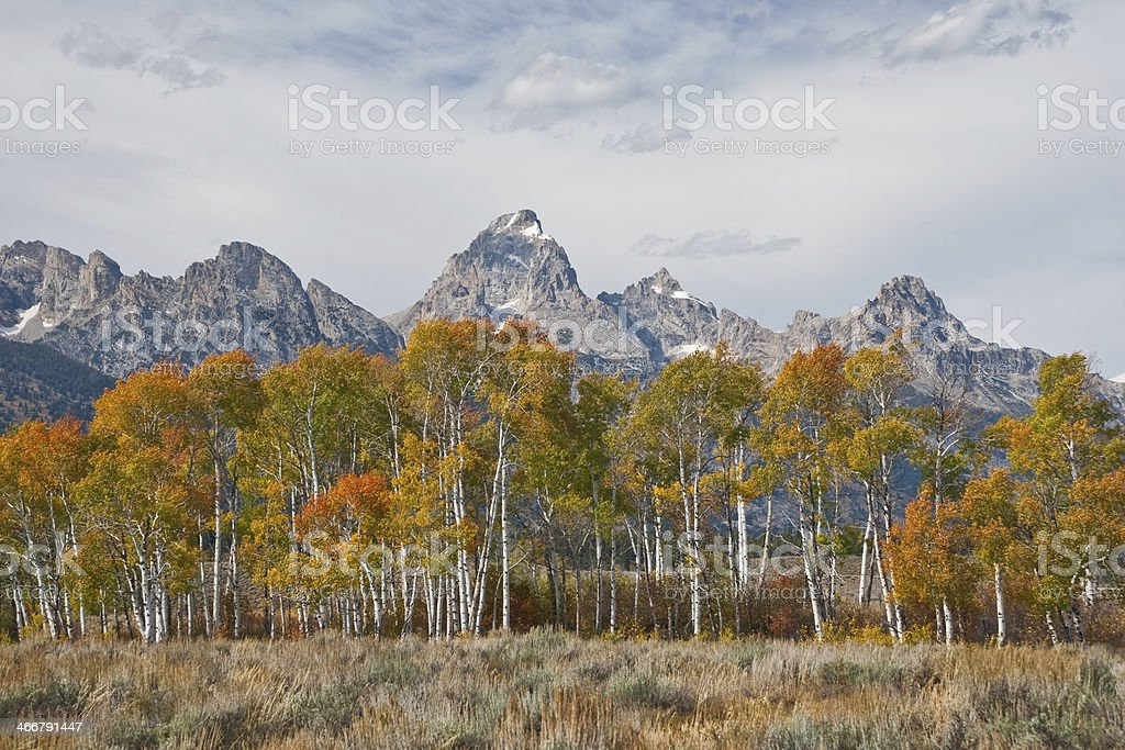 Fall Colors in the Tetons stock photo