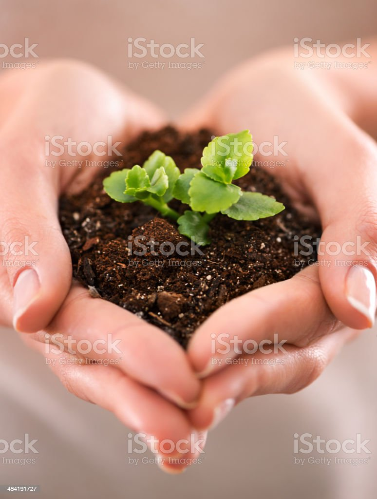 Every great thing starts small stock photo