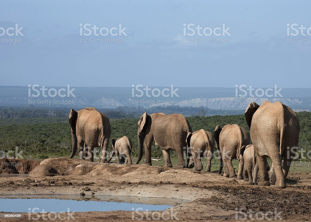Everyone Around the Watering Hole royalty-free stock photo